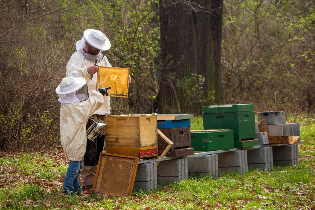 Bienenhaltung Imker mit Kind