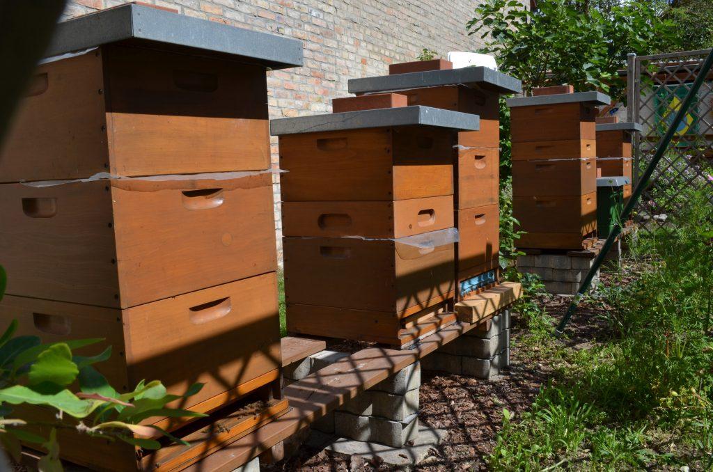 Bienenstand Beispiel