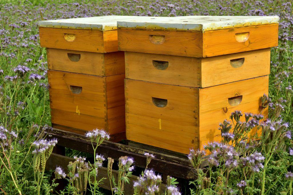 Magazin Beuten - Bienenbehausung