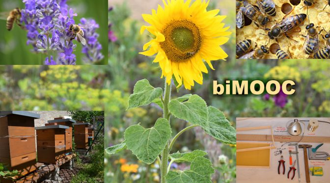Bienen & Imkerei Wissen (Projektinfo)