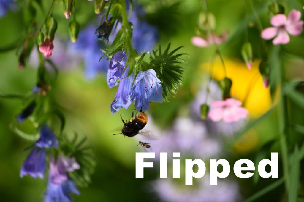 Flipped Classroom Bild
