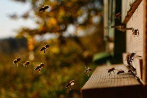 Fluglochbild, Bienenpatenschaft