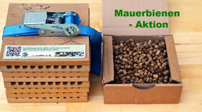Lernpfad: Mauerbienen-Aktion