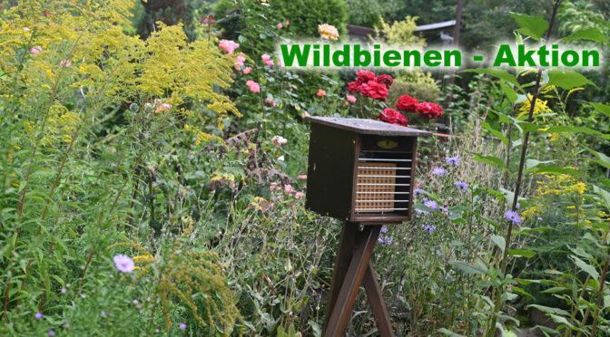 Wildbienen-Aktion (Wohnungsgenossenschaft)
